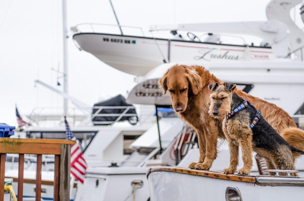 mag hond mee op cruise