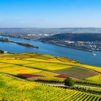 6-daagse riviercruise met mps Statendam Beleef de Rijnromantiek naar Rüdesheim de jong intra